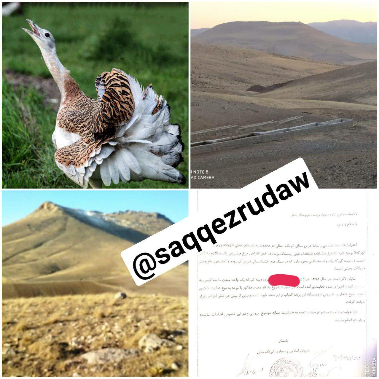 تهدید زیستگاه میش مرغ ها با صدور مجوز کارگاه معدن شن کوهی در روستای کوچک سفلی